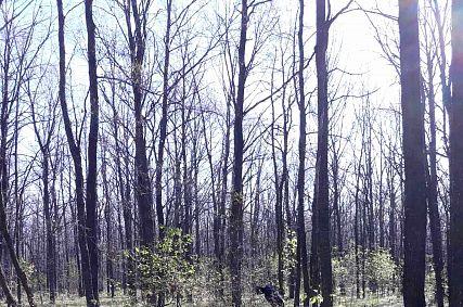 Нашествие гусениц на лес возле Дмитриевки: кадры из фильма ужасов?